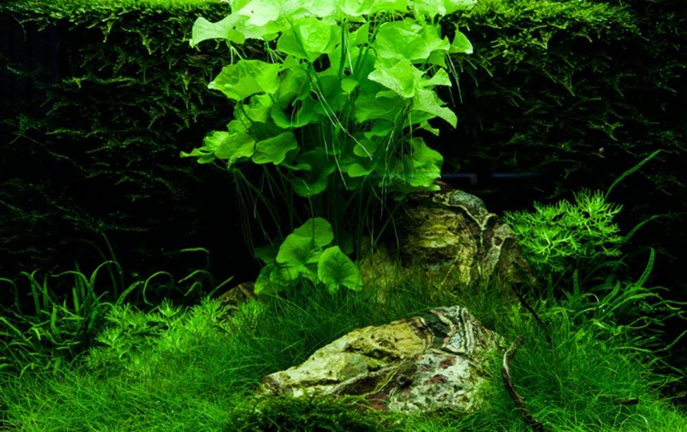 Réaliser un paysage aquascape avec un aquarium 100 litres..