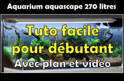 Comment réaliser un aquascape avec un aquarium de 270 litres