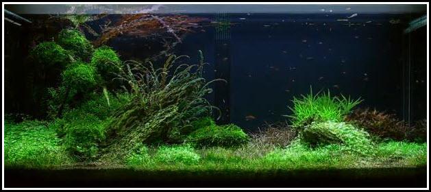 aquarium-300-litres-90-jours