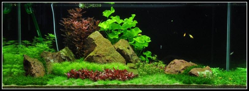 aquarium-270-litres-03