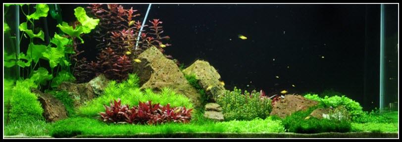 aquarium-270-litres-04