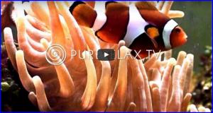 Aquarium tropical et musique de relaxation