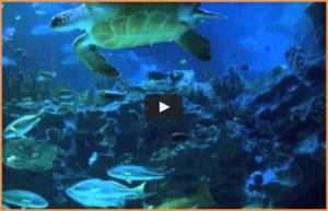 1 H 50 de musique relaxante vidéo d'un aquarium