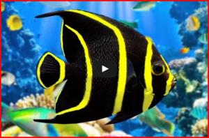 2 heures de musique relaxante avec une vidéo aquarium de corail
