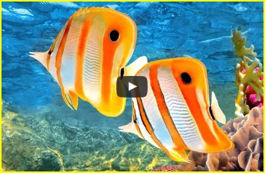 2 heures de musique relaxante avec une vidéo d'un aquarium corail de récif
