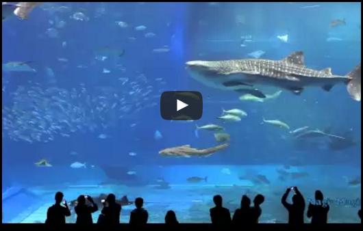 2 Heures de musique relaxante et vidéo en aquarium géant