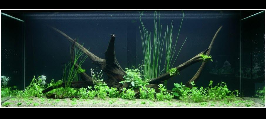 aquarium-300-litres-aquascape-02