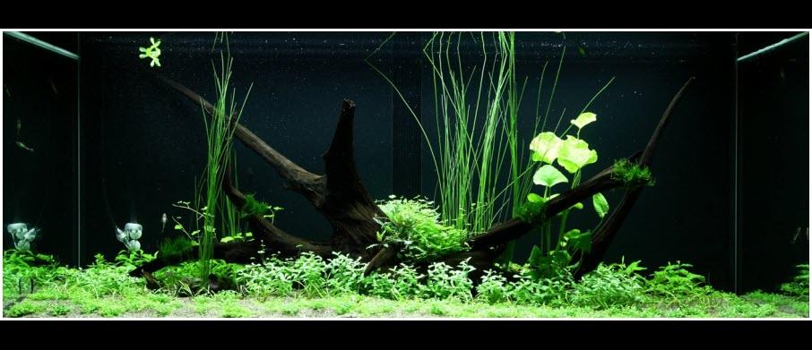 Comment réaliser un paysage aquascape facilement avec un aquarium de 300 litres
