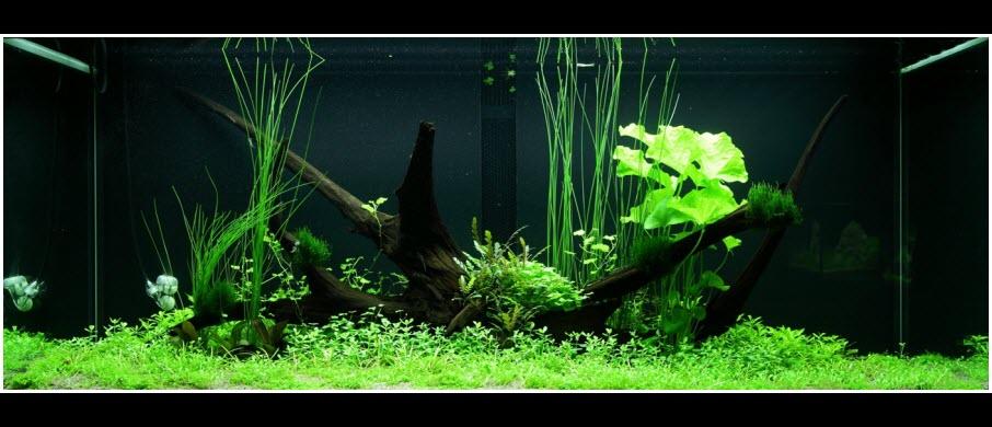 aquarium-300-litres-aquascape-06