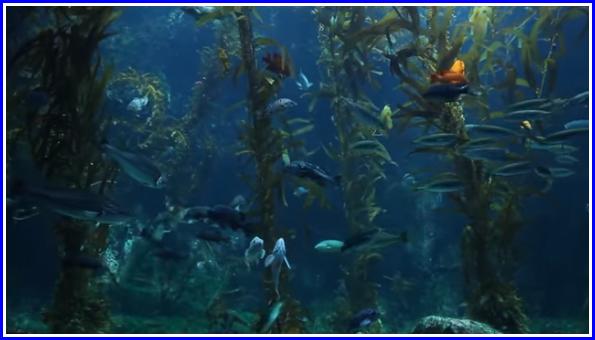 3 heures de détente musique instrumentale avec une vidéo d'un aquarium
