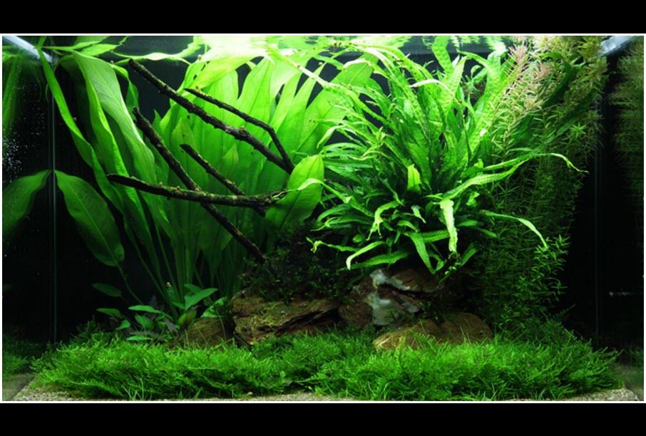 Comment réaliser un paysage aquascape avec un aquarium de 100 litres