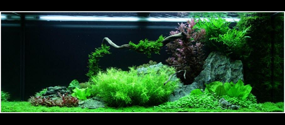 aquarium-01-240_litres