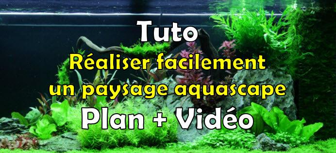 Comment réaliser facilement un paysage aquascape avec un aquarium de 240 litres