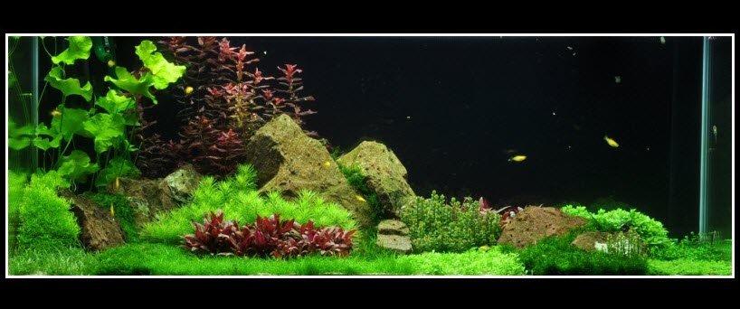 Comment réaliser un paysage aquascape avec un aquarium 270L