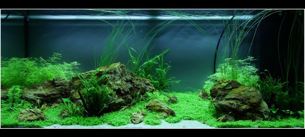 Réaliser un paysage aquascape avec un aquarium 180 litres..