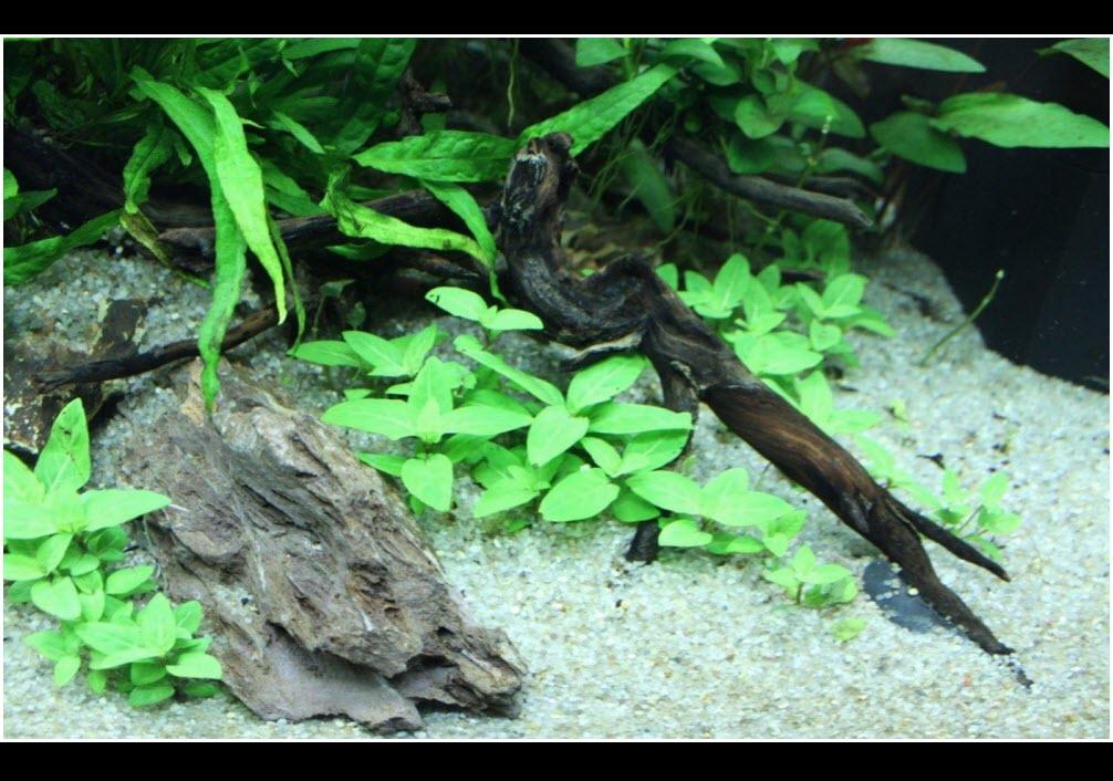 Réaliser un paysage aquascape avec un aquarium 125 litres