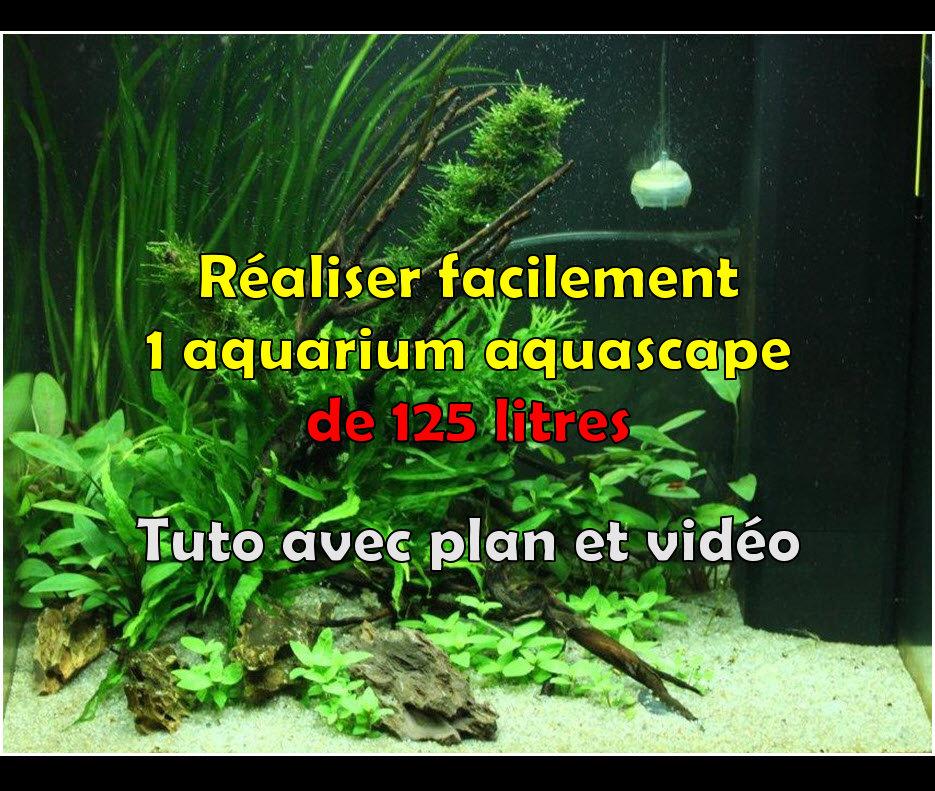 Comment réaliser un paysage aquascape avec un aquarium Juwellido de 125 litres