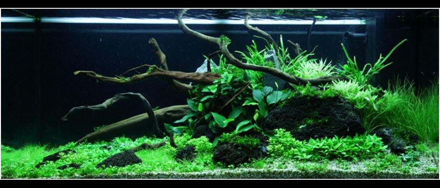 Comment réaliser un paysage aquascape avec un aquarium juwel de 180 litres