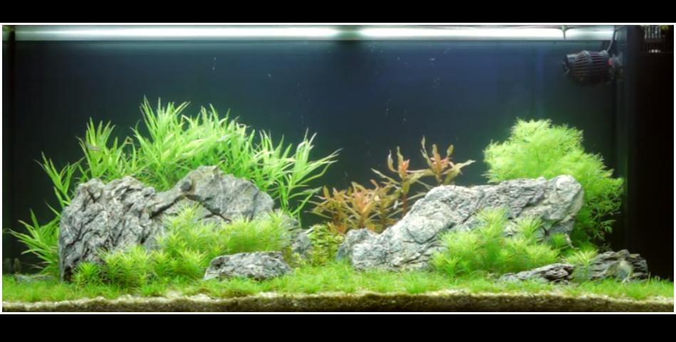 aquarium-180-litres-3